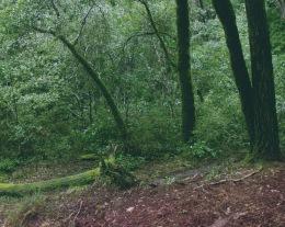 A Walk in the Woods 1 - RYAN KOENIG