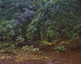 A Walk in the Woods 2 - RYAN KOENIG