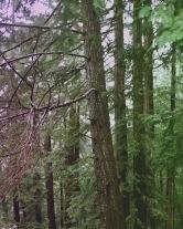 A Walk in the Woods 3 - RYAN KOENIG