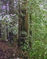 A Walk in the Woods 4 - RYAN KOENIG