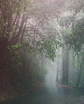 A Walk in the Woods 5 - RYAN KOENIG